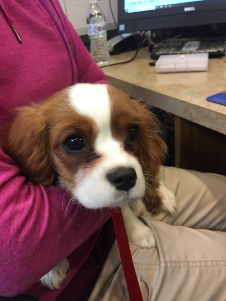 Allentown Animal Clinic: 2640 Walbert Ave, Allentown, PA