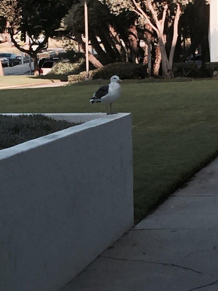 Santa Monica Courthouse 15 Photos 67 Reviews Public
