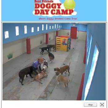 Photo Of Best Friends Cinnaminson Nj United States Doggie Cam