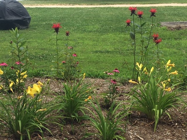 Dohne's Landscape Services: 1168 Steamboat Rd, Shady Side, MD