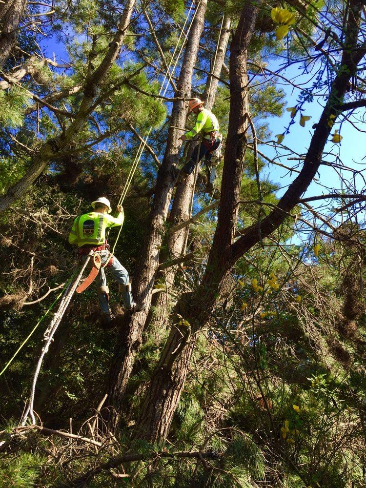 Family Tree Service: 41701 N Highway 101, Laytonville, CA