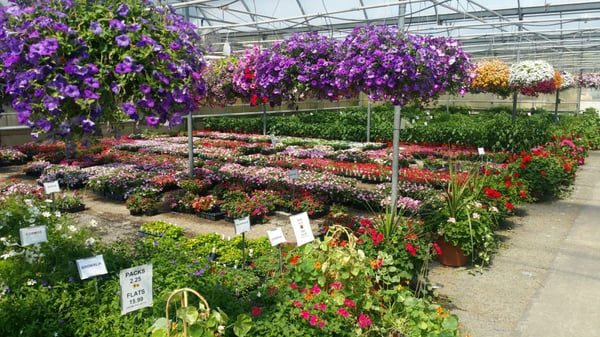 Great Swamp Greenhouses 553 New Vernon Rd Gillette Nj Nurseries Mapquest