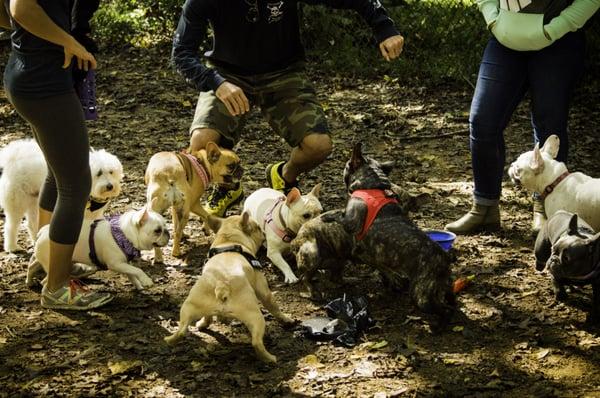 Dog Park In Matthews Nc