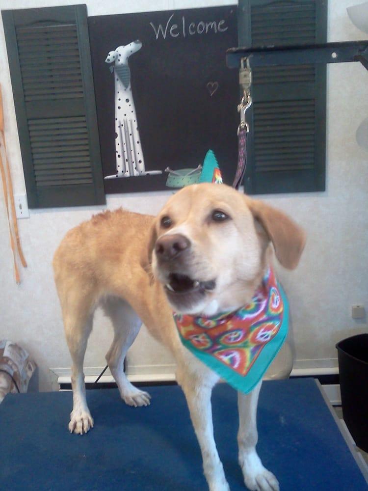 Smoochie Poochies Doggie Day Spa: 323 W Main St, Flushing, MI