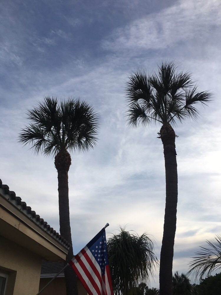 El Cheapo Tree Service: 6104 100th Way N, Saint Petersburg, FL