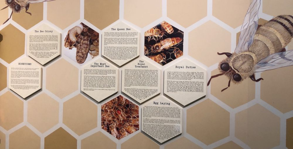 Social Spots from Insectropolis