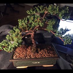 Colorado Bonsai Nurseries Gardening 12355 W 34th Pl Denver Co Phone Number Last Updated December 18 2018 Yelp