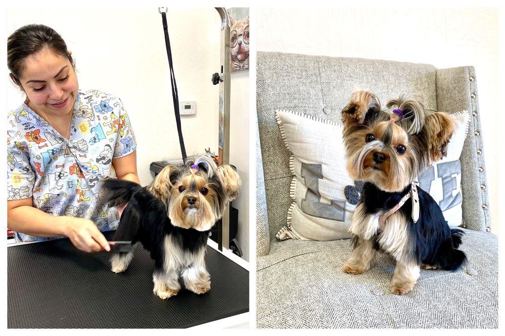 Rachel's Dog Grooming: 75 Dempsey Rd, Milpitas, CA