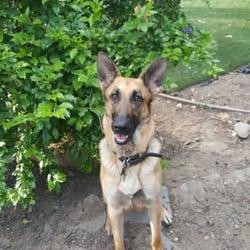 german shepherd rescue chicago