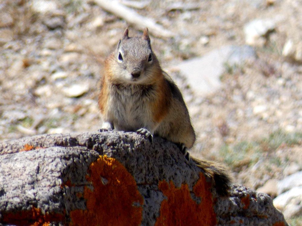 Cedar Breaks National Monument: Hwy 148, Brian Head, UT