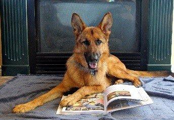 Dog Training Denison Tx