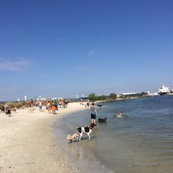 Photo Of Davis Island Dog Beach Tampa Fl United States Dogs Wading