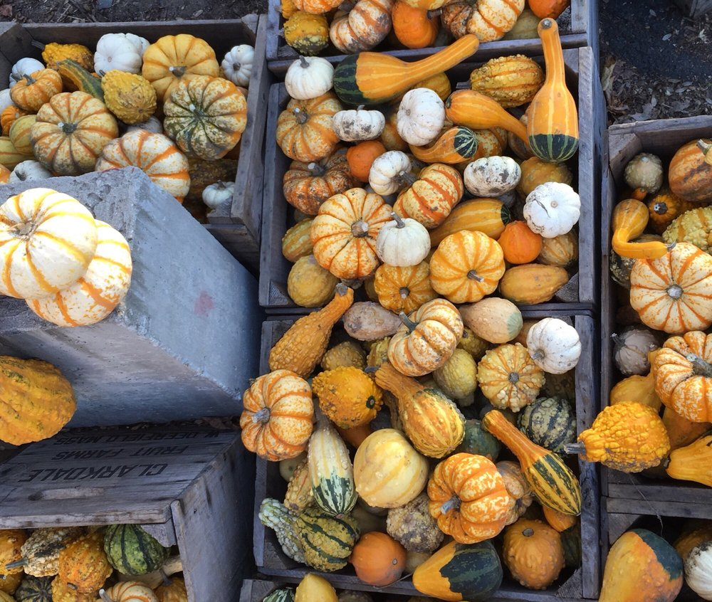 Clarkdale Fruit Farm: 303 Upper Rd, Deerfield, MA
