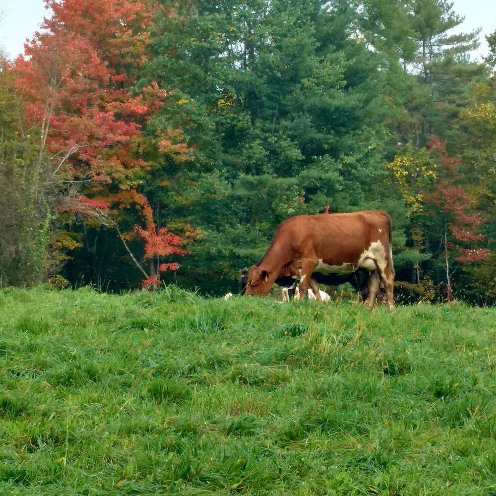 Franklin Farm: 4708 Weatherhead Hollow Rd, Guilford, VT