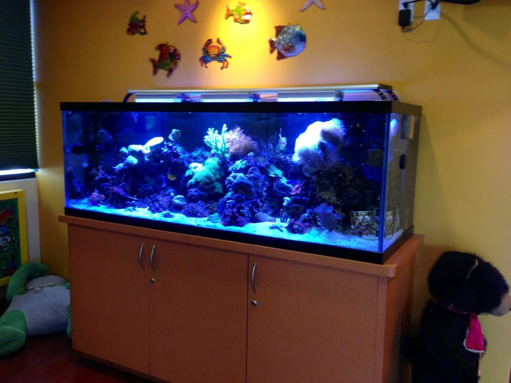 fish tanks for kids rooms