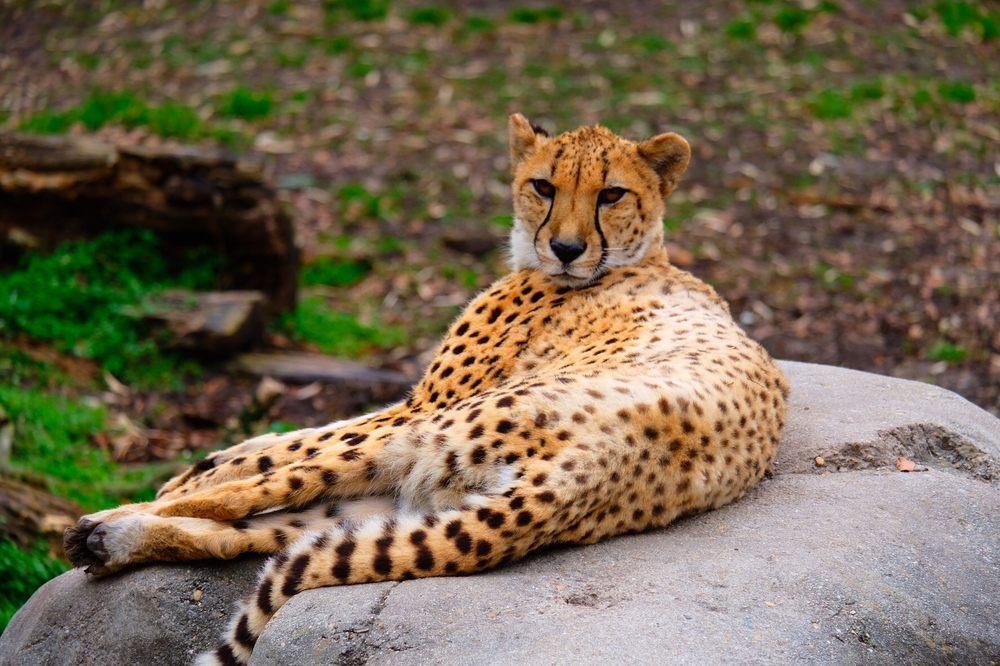 Virginia Zoo: 3500 Granby St, Norfolk, VA