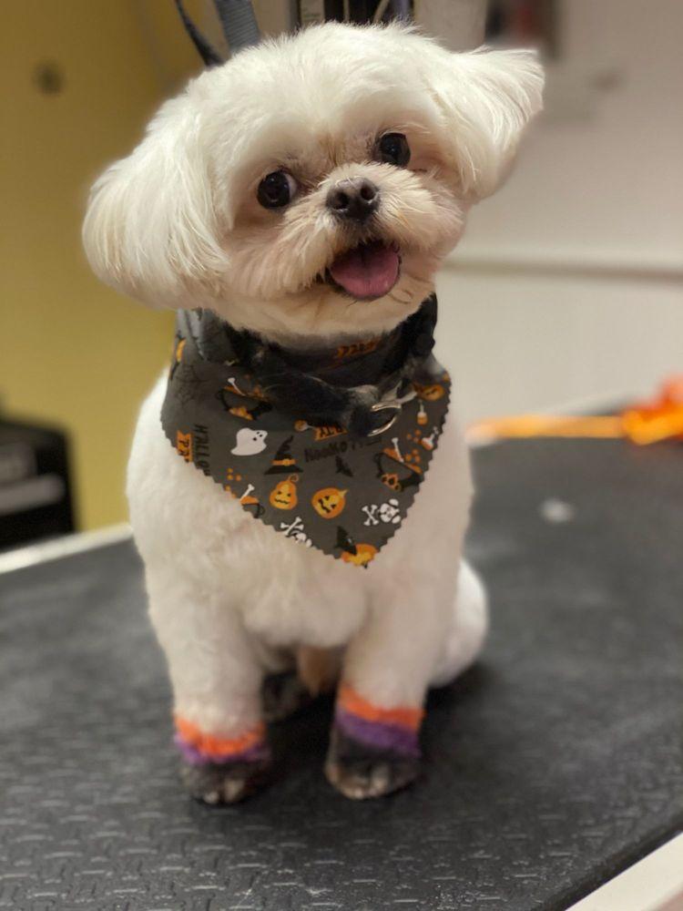 My Dog's Groomer: 2209 Division, Melrose Park, IL