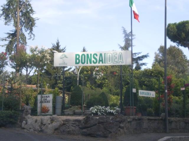 Bonsaidea