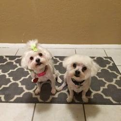 PetSmart - (New) 20 Reviews - Pet Training - 12835 Citrus