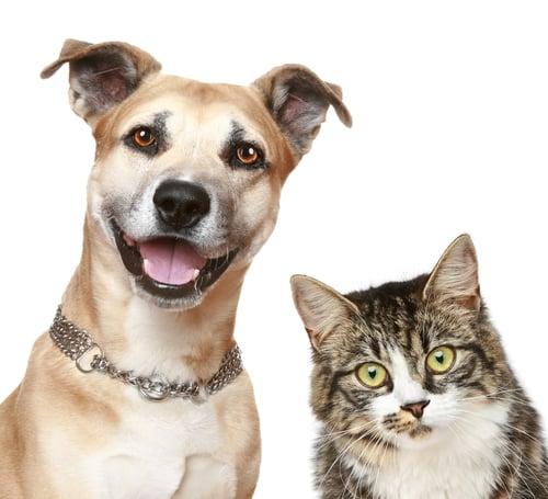 Clever Boy Pet Care: 4001 Sapphire Ln, Bethlehem, PA