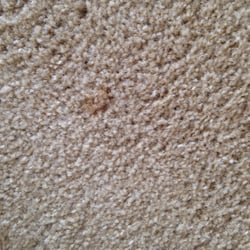 Photo Of Best Way Rug U0026 Furniture Cleaners   Wheaton, IL, United States.