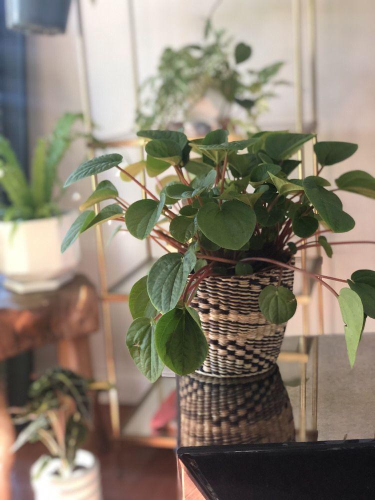 Venice Plants 128 Photos 129 Reviews Nurseries