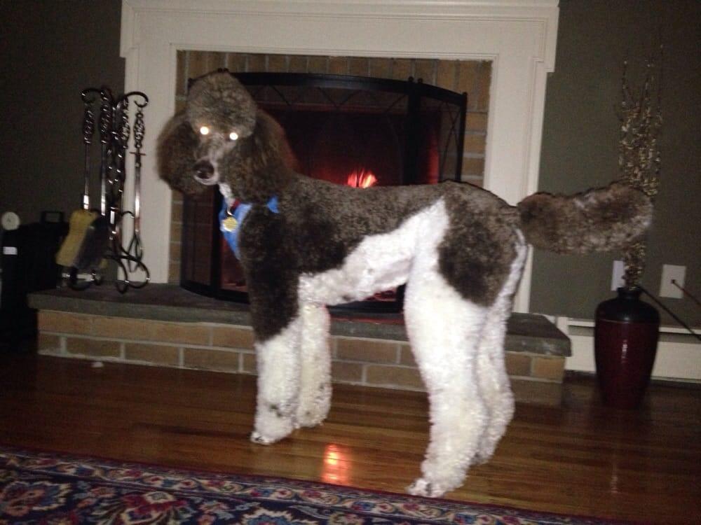 Fulton's Professional Dog Grooming: 682 Lancaster Ave, Berwyn, PA