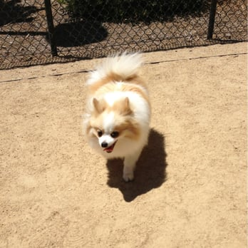 Rincon Hill Dog Park
