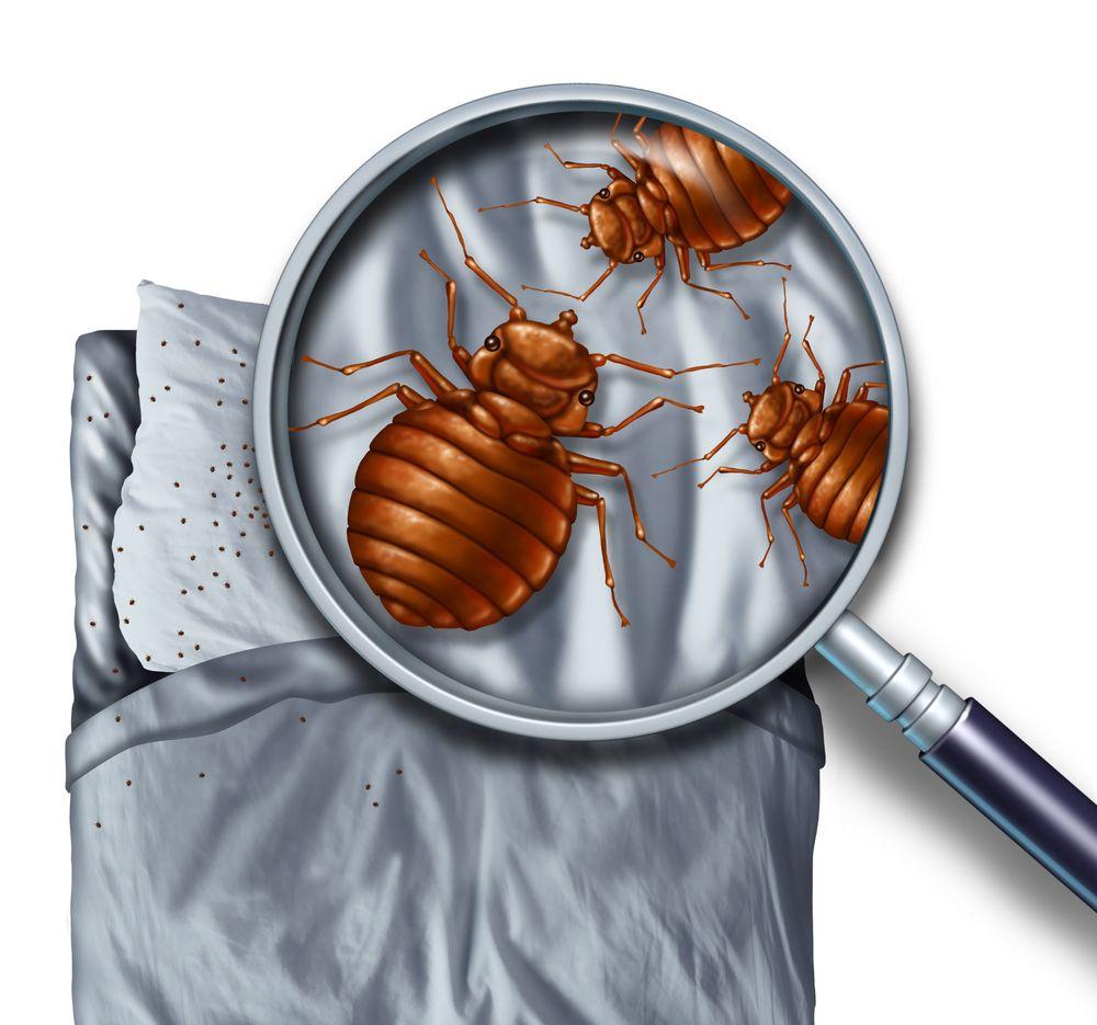 Taylor Termite & Pest Control: 2122 W Zion Rd, Salisbury, MD