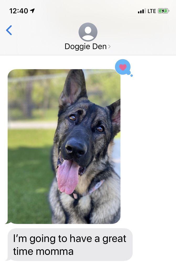 The Doggie Den: 139 Clermont Rd, Fairmont, WV