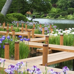 Photo Of Missouri Botanical Garden   Saint Louis, MO, United States. Water  Irises