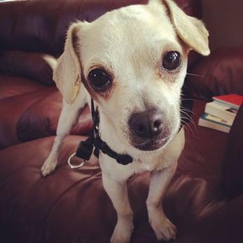 Misty Creek Dog Rescue - 11 Photos - Animal Shelters - 300