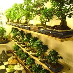 Bonsai Garten Hamburg : bonsai garten gardeners lokstedter steindamm 55 c ~ Lizthompson.info Haus und Dekorationen