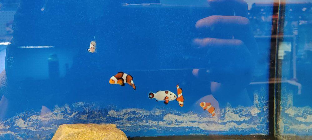 Aquarium Specialties: 235 Lancaster Ave, Malvern, PA