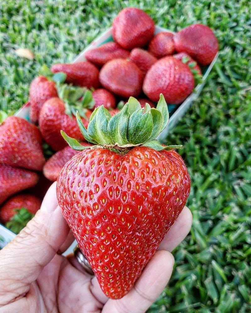 Bixby Knolls Farmers Market: 46TH And Atlantic, Long Beach, CA