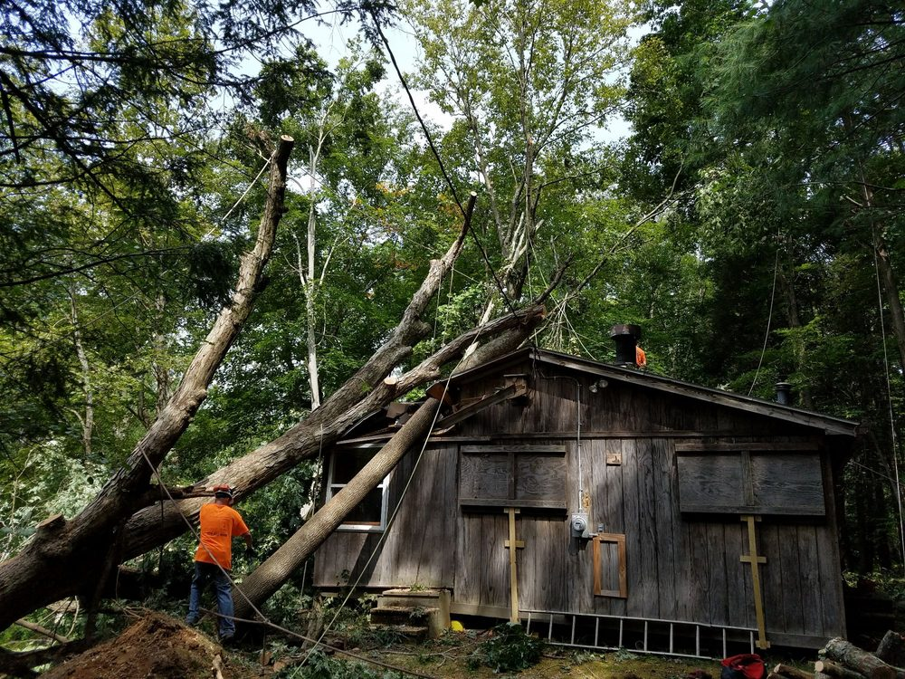 Morgan Brothers Tree Service: 5780 Boyertown Pike, Birdsboro pa, AL