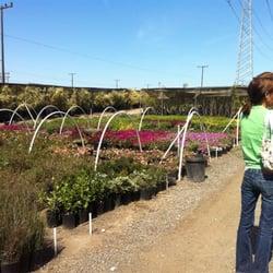 Amazing Photo Of C Stars Nursery   Gardena, CA, United States ...