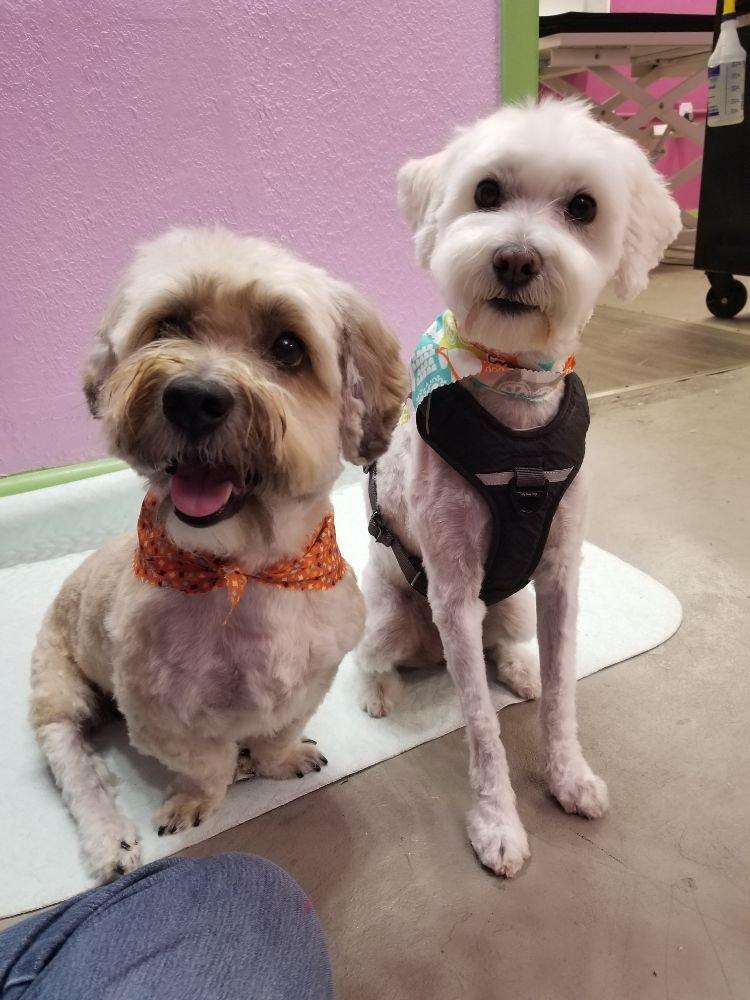 PuppyCuts Grooming Salon