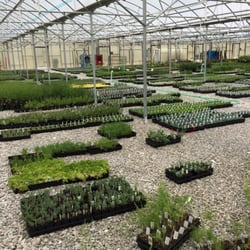 Photo Of Mary S Greenhouse Mcminnville Tn United States Ing Herbs