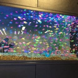 Pisces reef fish emporium 43 photos 62 reviews pet for Fish store las vegas