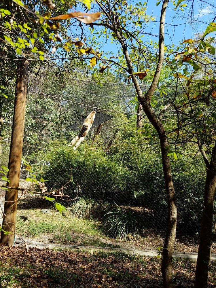 Santa Fe College Teaching Zoo: 3000 NW 83rd St, Gainesville, FL