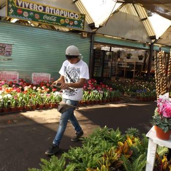 Mercado De Plantas Cuemanco Viveros Y Jardineria Periferico Sur