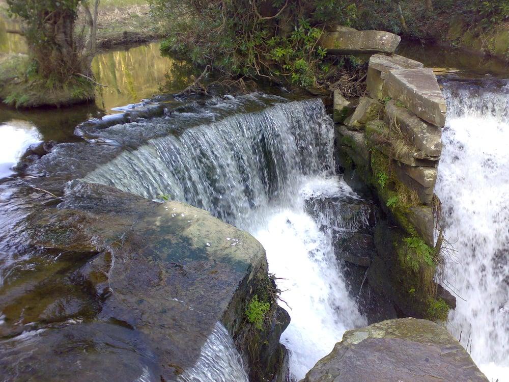 Penllergaer Woods: Swansea, SWA