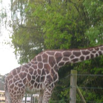 serengeti park 304 fotos 98 beitr ge freizeitpark am safaripark 1 hodenhagen. Black Bedroom Furniture Sets. Home Design Ideas