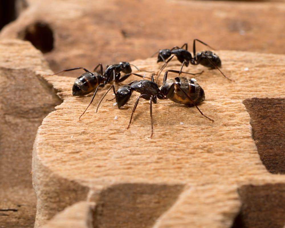 Prosite Pest Control: 100 E University Way, Ellensburg, WA