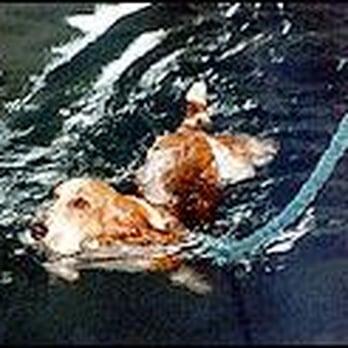 Northern Virginia Animal Swim Center Physical Therapy - Us maps virginia animap