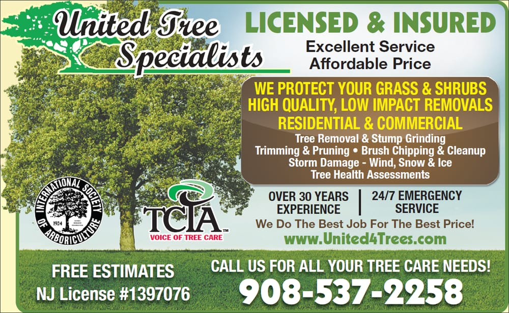 United Tree Specialists: 8 Johnson Ave, Hampton, NJ