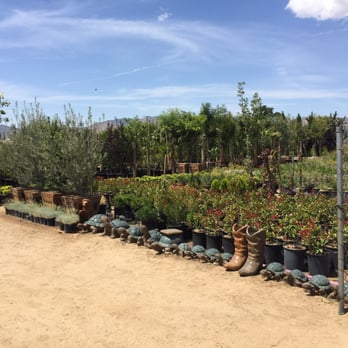 Photo Of Evergreen Nursery Palmdale Ca United States