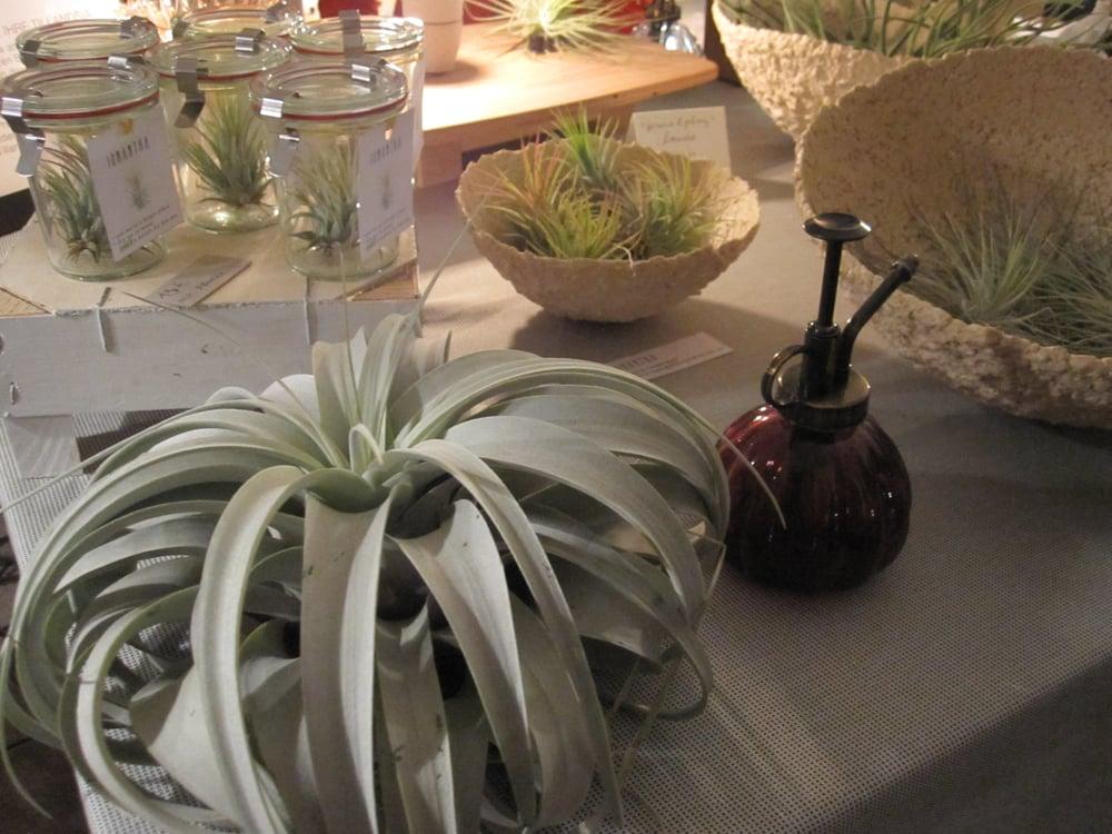 Luftpflanzen Berlin tillandsia-luftpflanzen - ornamentale pflanzen aus lateinamerika - yelp