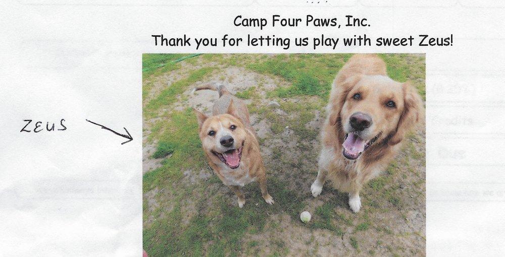 Camp Four Paws